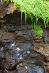 Still life with seashells, wet moss and rocks