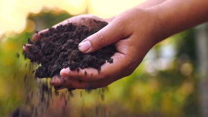 Hands pouring organic soil with sunrise slow motion