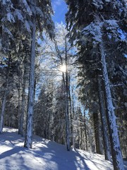 snow in black forest, Germany