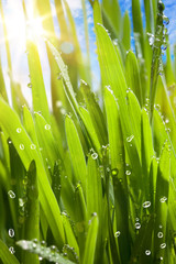 natural spring green background