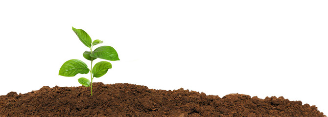 small green seedling in the ground, isolated
