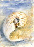 A spiral shell near the sea