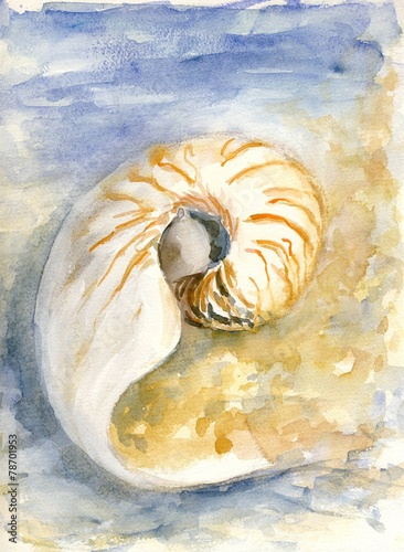 A spiral shell near the sea - 78701953