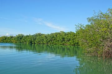 Mangrovie Florida