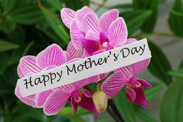 Happy Mother's day card with pink orchid