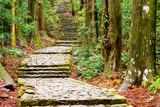 Kumano Kodo Trail at Daimon Slope in Nachi, Japan