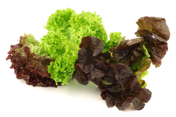assorted lettuce on a white background