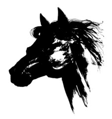 Black horse head carbon drawing