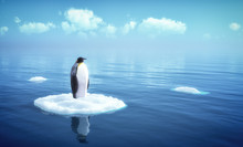 "Постер, картина, фотообои ""single penguin on a piece of ice"""