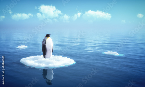 single penguin on a piece of ice - 78706969