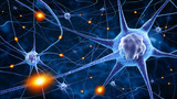 nerve cells - 78707112