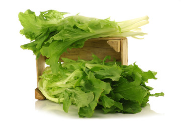 freshly harvested endive in a wooden box on a white background