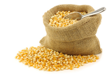 yellow corn grain in a burlap bag on a white background
