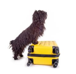 Schwarzer Hund mit gelben Reisekoffer