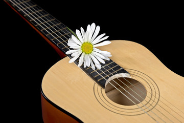 white daisy on six string guitar