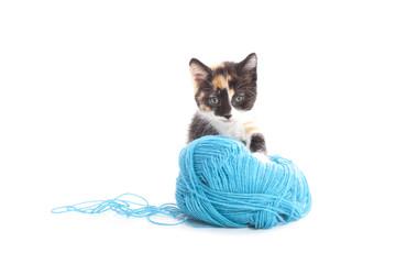 Cute kitten with wool