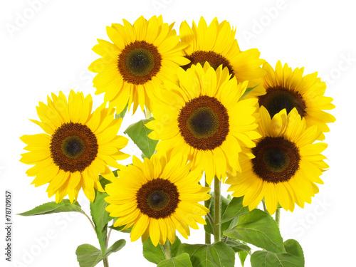 Foto op Aluminium Zonnebloem Sonnenblumen