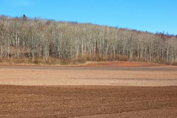 Harrowed field at spring
