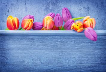 Tulpen, Holzhintergrund