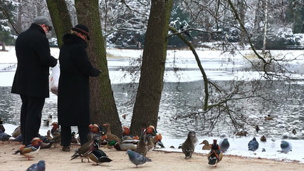 Man and the woman feed ducks in park in winter