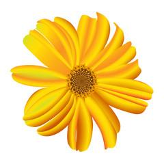 A single daisy flower. Vector.