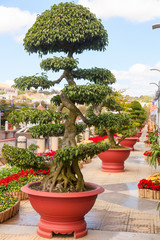 Bonsai trees at City flower garden in Dalat, Vietnam