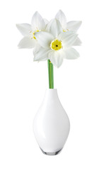 White and yellow color daffodil in vase isolated on white backg