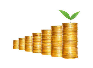 Savings, increasing columns of gold coins and green plant isolat
