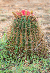 Close-up photo of green cactus outdoors.