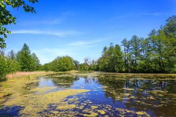 Summer on small lake