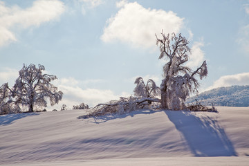 Bianco neve e ombre