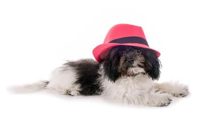 Kleiner Hund mit rosa Hut