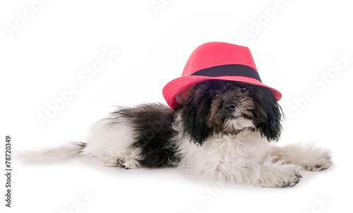 Staande foto Dragen Kleiner Hund mit rosa Hut