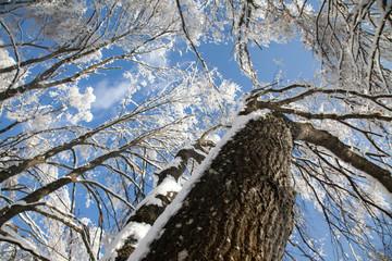 Rami e tronco su cielo azzurro