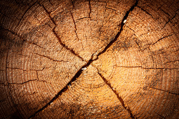 pine tree stump texture