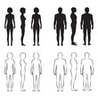 human body anatomy,front vector man, woman silhouette - 78722128