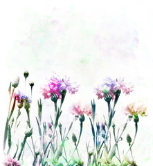 Cornflowers Watercolor