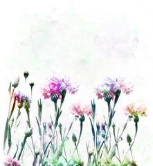 Cornflowers Watercolor