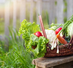 Fresh organic vegetables in the basket
