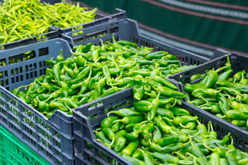 Green peppers in boxes