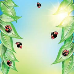 Red ladybugs on the green leaves.