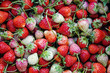 canvas print picture - fresh Strawberries