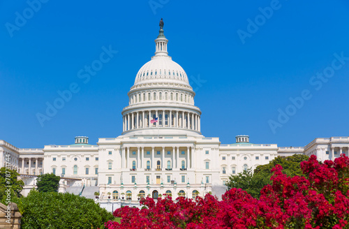 Fotobehang Historisch mon. Capitol building Washington DC pink flowers USA