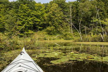Kayaking in a Conservation Area