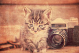 Kitten with vintage photo camera, vintage image - 78735304