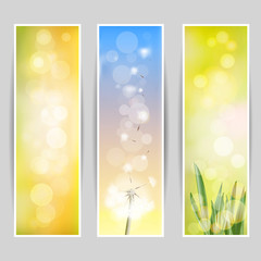 Spring vector set of white dandelion and green grass.