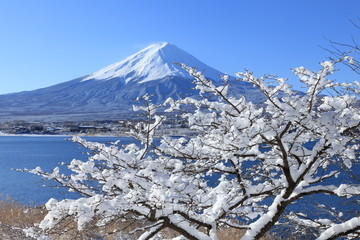雪景色の河口湖と富士山