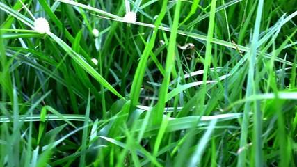 Grass under sunshine. Shift macro video