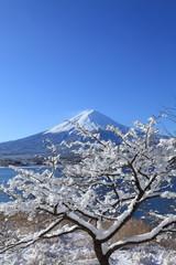 雪景色の富士山