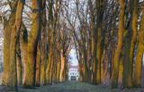 Aleja starch drzew poster